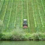 17 Bildergalerie Moselfahrt zum EUROSTRAND nach Leiwen (27.08.-01.09.2017)